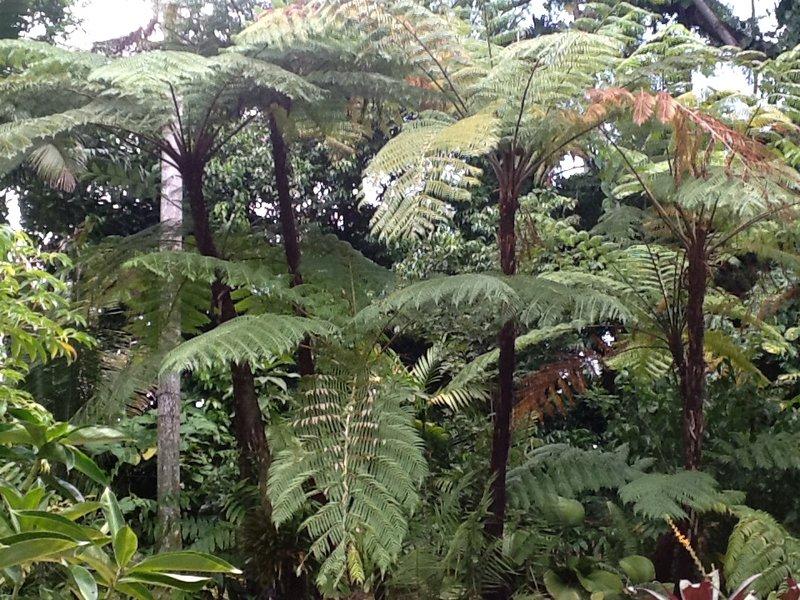 Het regenwoud in zijn natuurlijke doen