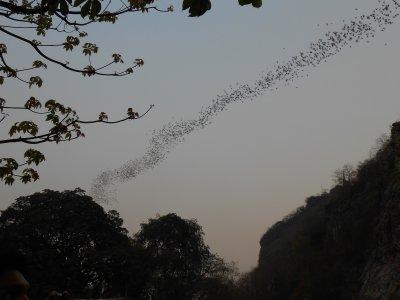 Bats exiting the cave!