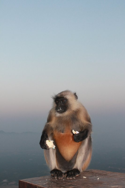 A monkey enjoying Raghu's cake!