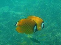 Cute fish!