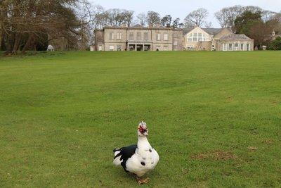 Clowance Country Estate