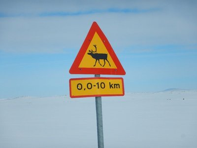 Reindeer Crossing