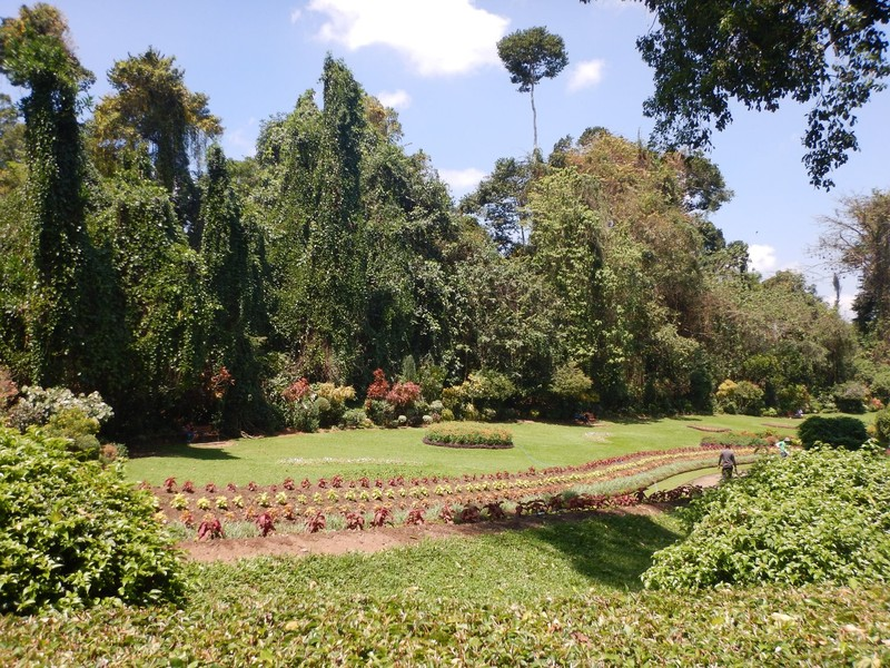 Looking across the Botanical Gardens