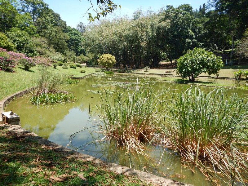 The lake at the Botanical Gardens