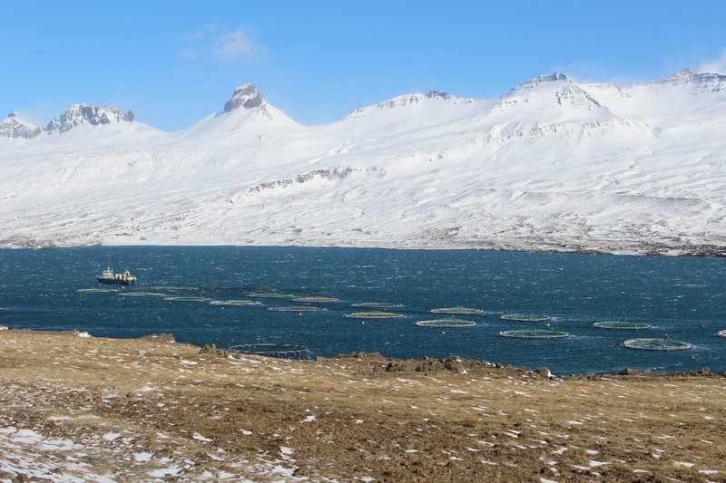 Fishing in the Icelandic Fjords