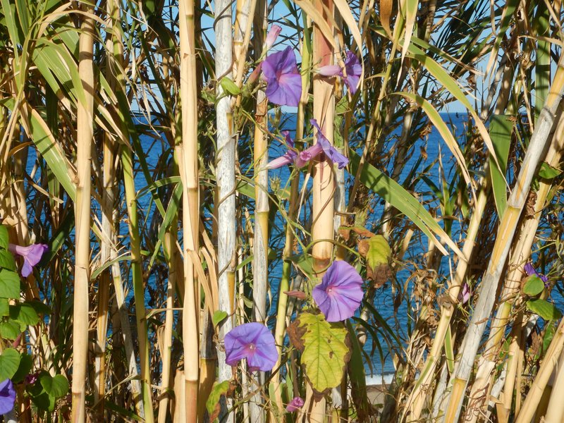 wild flowers growing up the bamboo