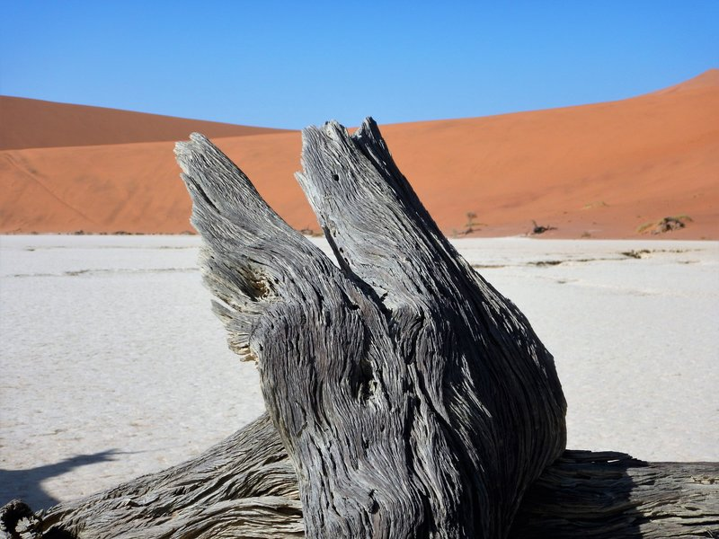 Dead Vlei Tree Trunk