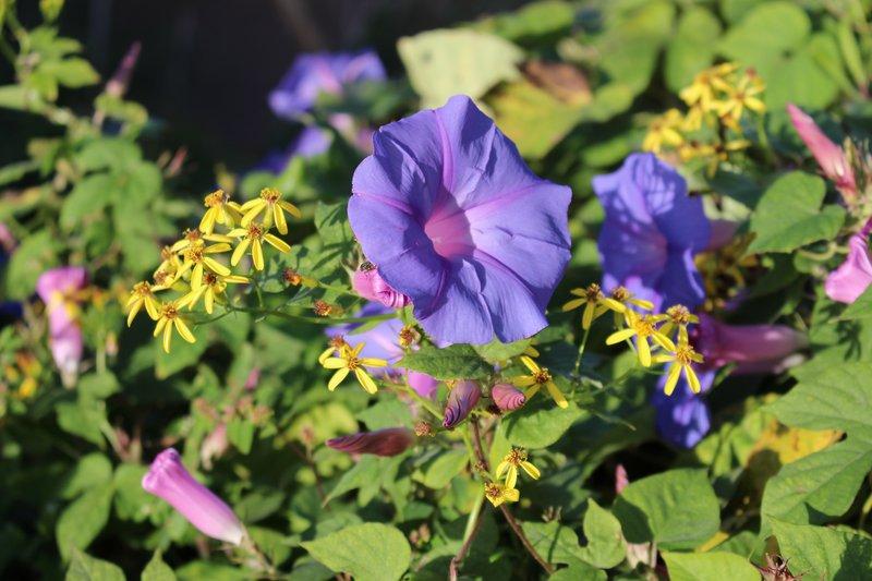 Cyprus wild flowers