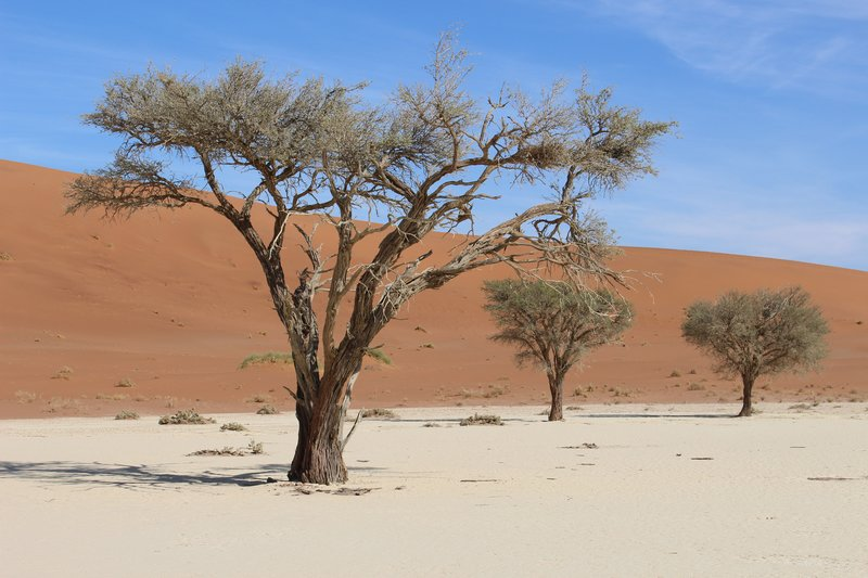 Living trees in the Dead Vlei