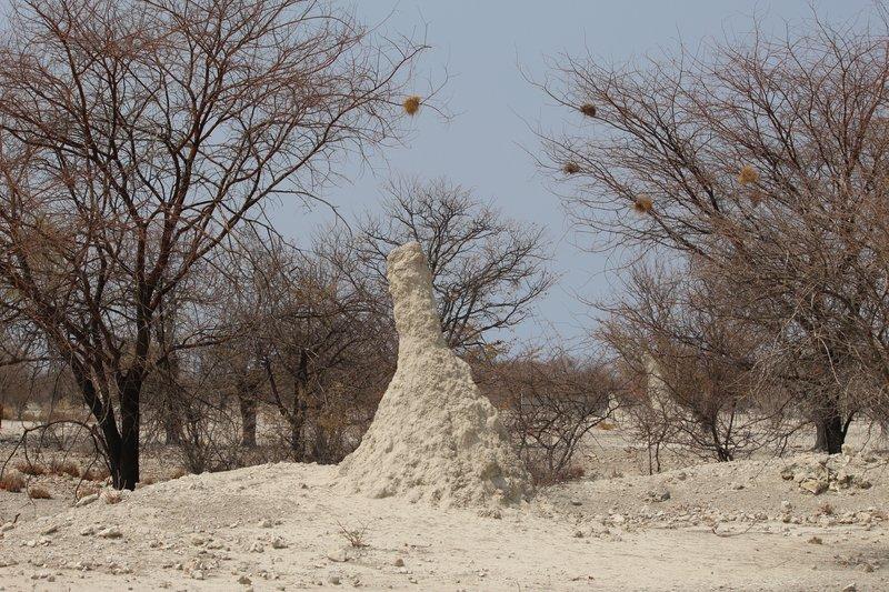 Large Termite Mound