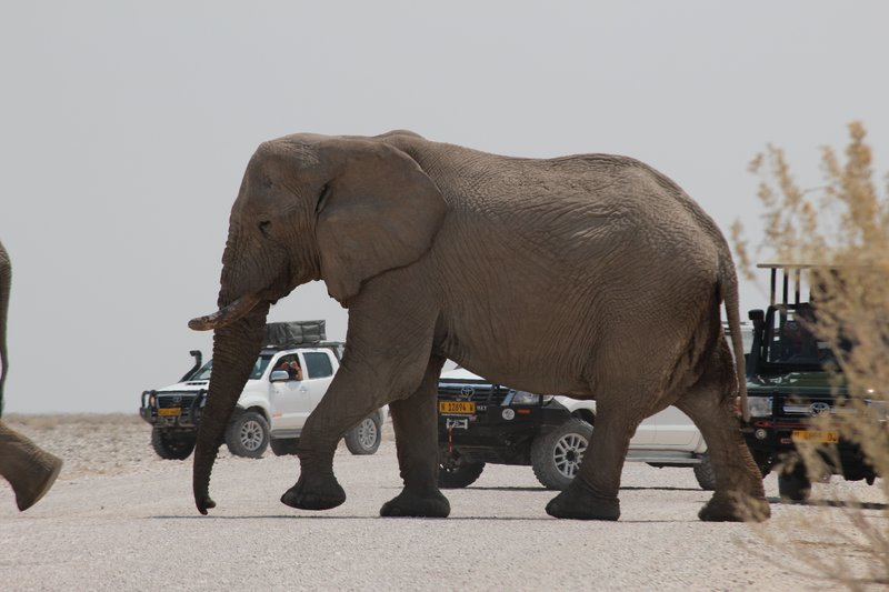 Elephants crossing