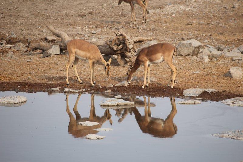 Reflections at Halali