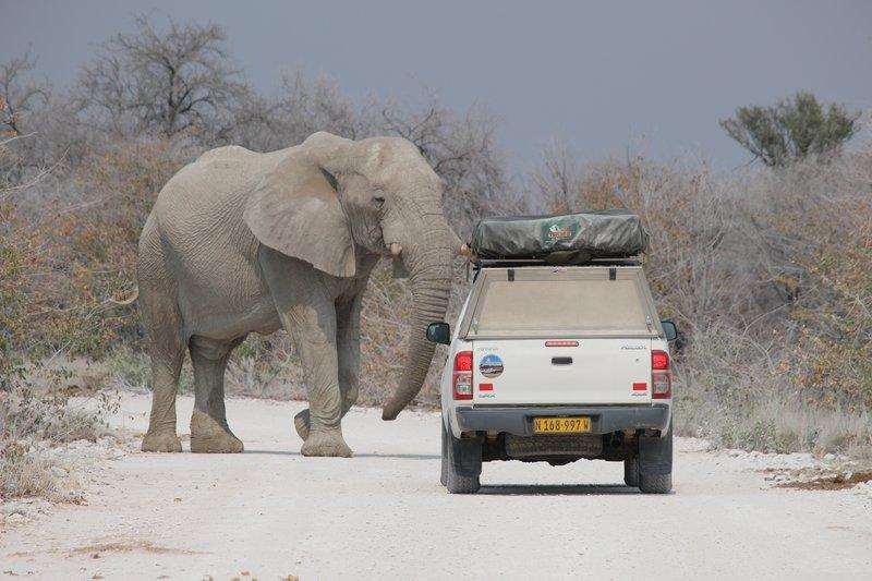 Elephant's Right of Way