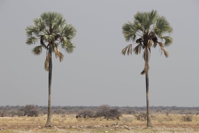 Twee Palms Waterhole