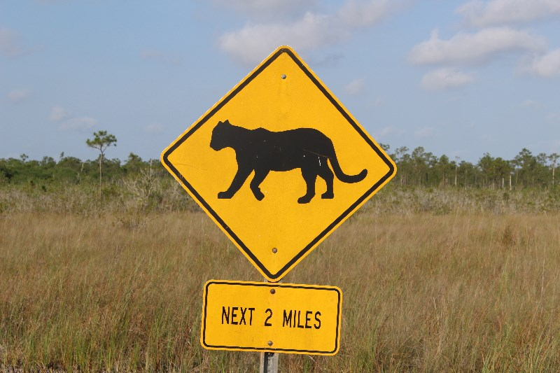 Florida Panther Warning Sign