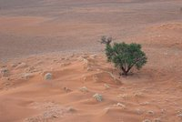 Green tree with red sands