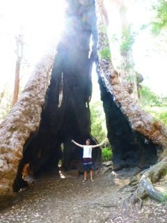 Dad and the big tree