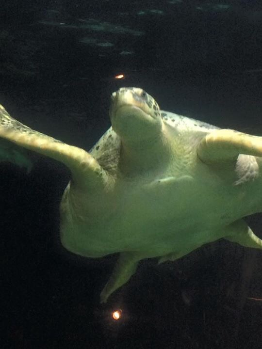 Turtle in Vancouver Aquarium