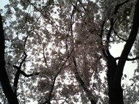 Blossom View (1)