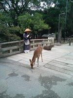 Monk and Deer