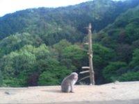 Monkey and Mountain