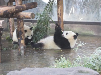 blogShanghai0024