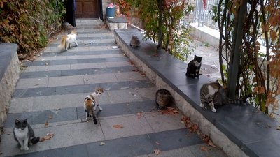 Cats in Plovdiv