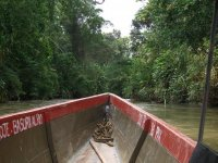 Cruising deeper into the tanning tributuries of the Amazon....
