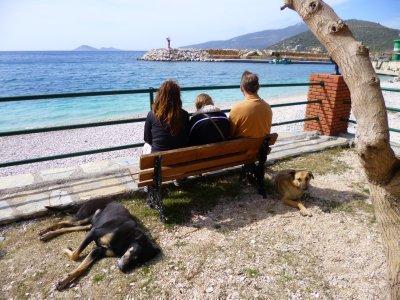 Kalkan: Stray Dogs