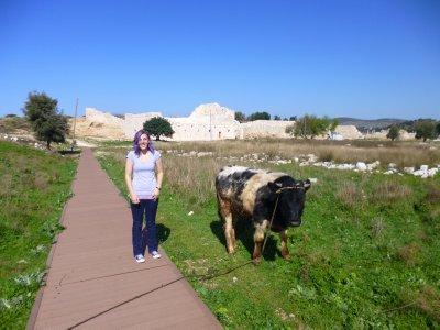 Sharing Patara with Farm Animals