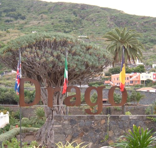 Drago Milenario Dragon Tree