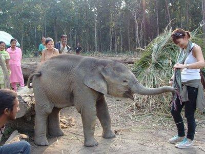 Curious Elephant Nepal