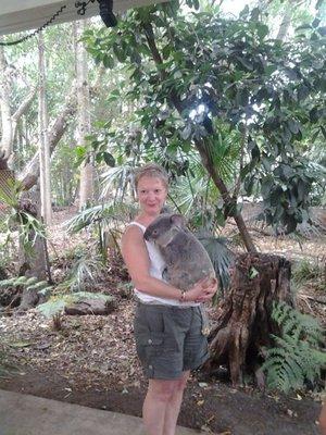 mum and the koala