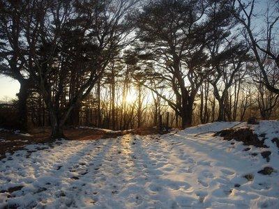 sun through the trees in fuji
