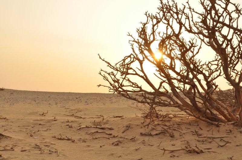 Desert during sun set .