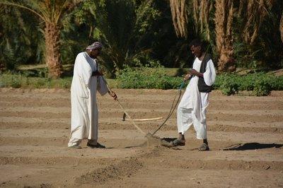 Sudan--Landbewerken naast onze kampeerplek