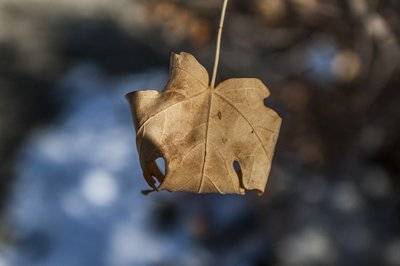 Leaf of fall