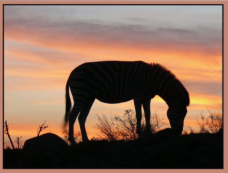 End of the day and the alphabet. (Sunset + Zebra)