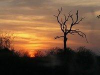Another Bushveld sunset