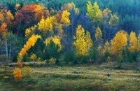 Fall Colours - Cycling