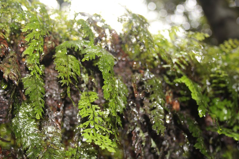 Tree moss and ferns