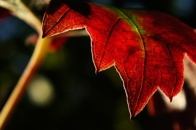 Rusted leaf