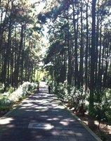 Dappled cycle path