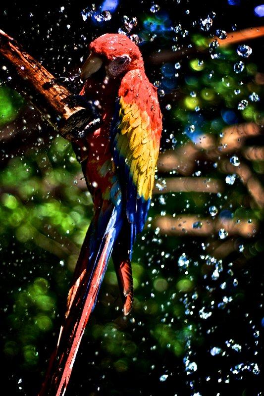 large_Bird_bath.jpg