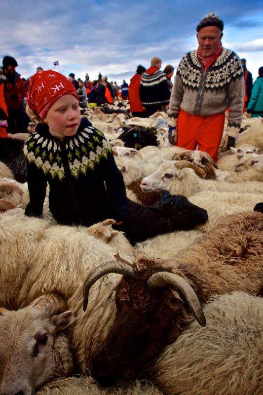 Iceland Sheep Round-Up