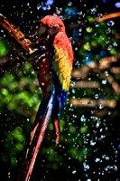 Bird Bath, El Salvador