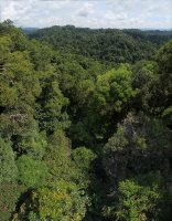 Over the canopy (Ulu Temburong National Park)