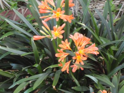 Sydney Australia - Flowers