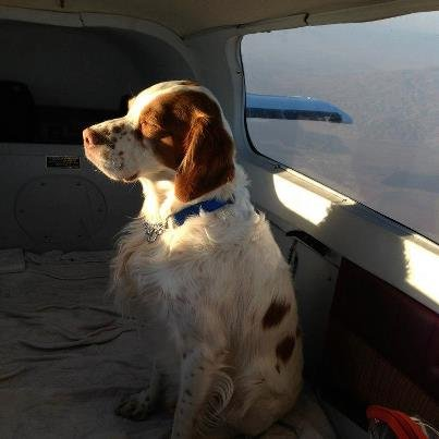 BrysonAir-Rescue dogs