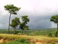 Green Fields atop the Shillong Peak